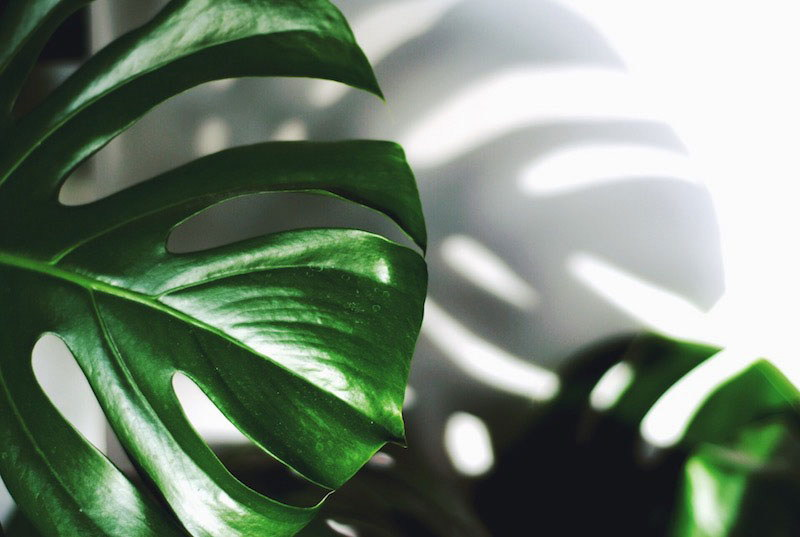 8 Ways Indoor Plants Can Improve Your Health